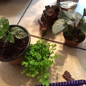 Small tropical plants to added to a closed terrarium